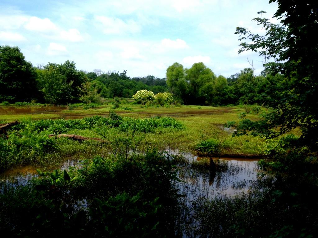 Constitution Lakes Park - History Atlanta 2014