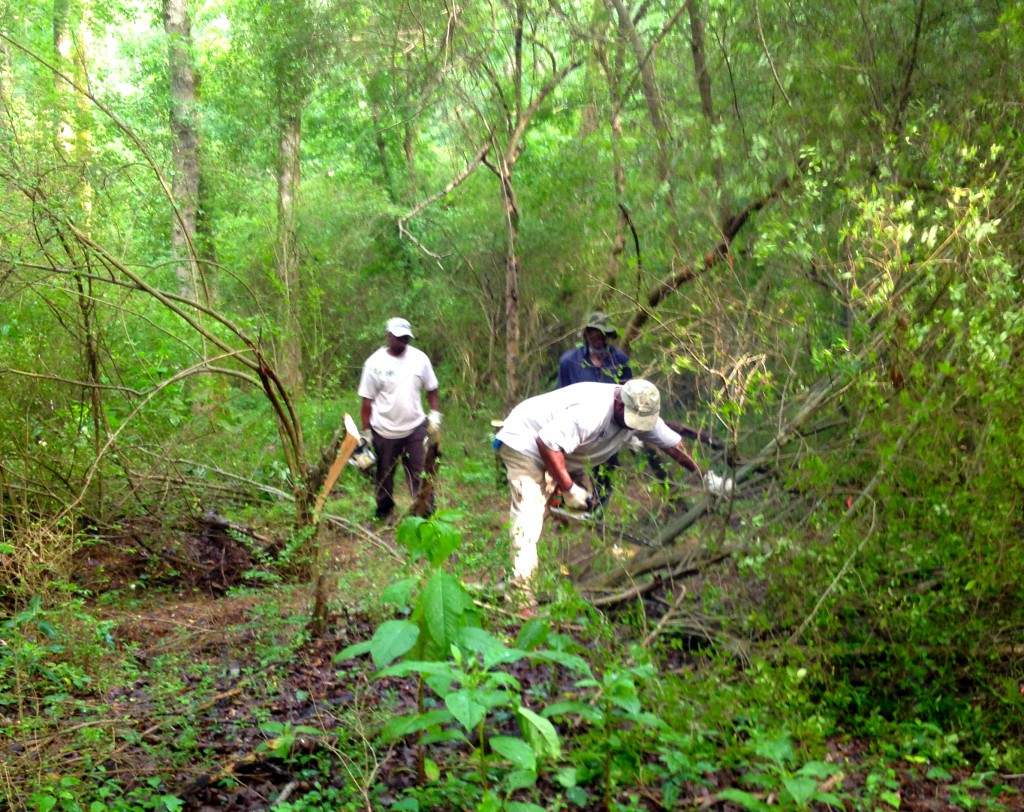 DeKalb County Workers Clearing a New Trail at Constitution Lakes Park - History Atlanta 2014