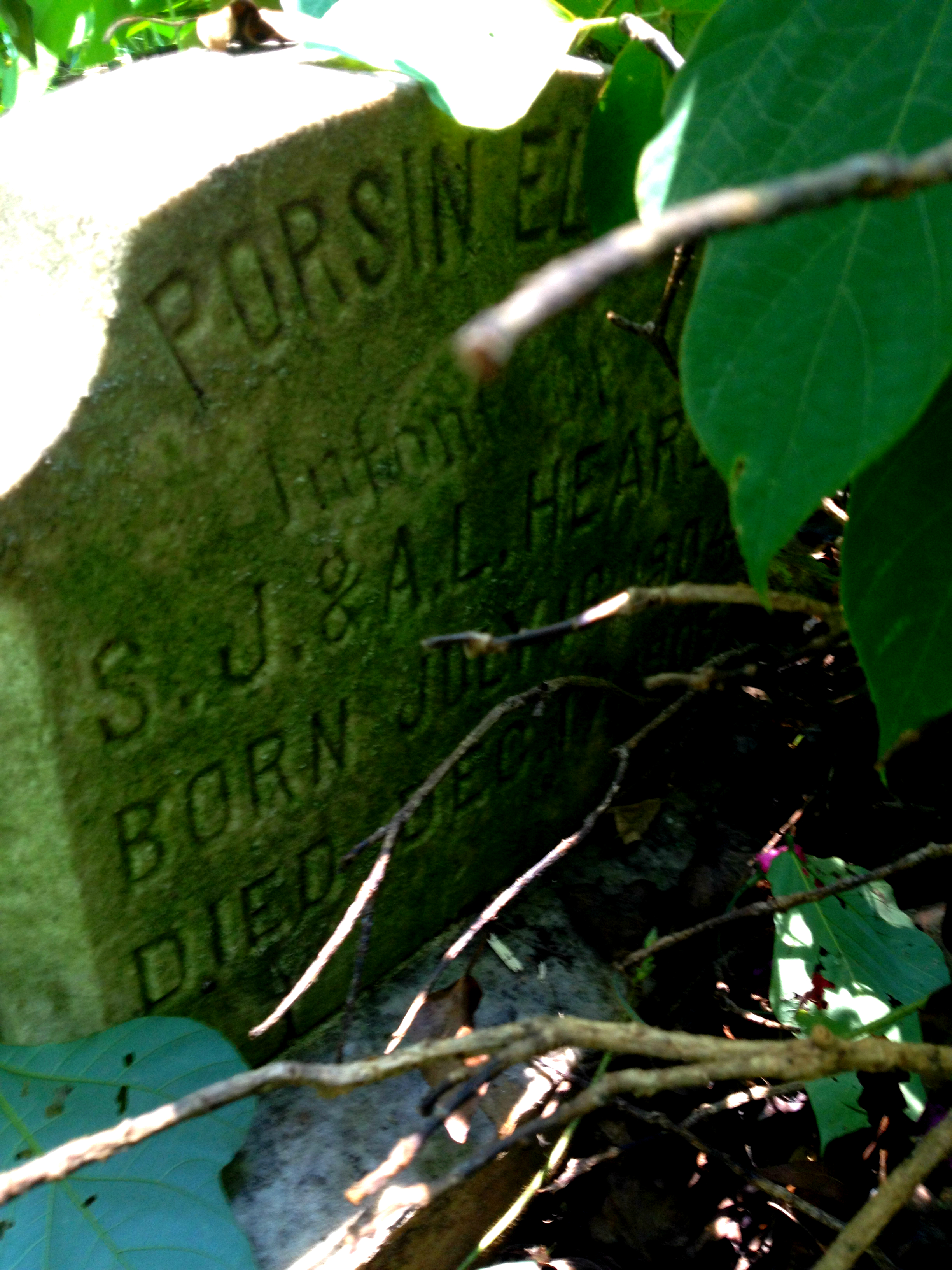 Overgrown Gravestone for Heard Family Infant - Thomasville Cemetery - History Atlanta 2014