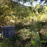 Scottdale Has Parts that are Overgrown Like Here and Parts That Are Maintained by James Robertson - History Atlanta 2014