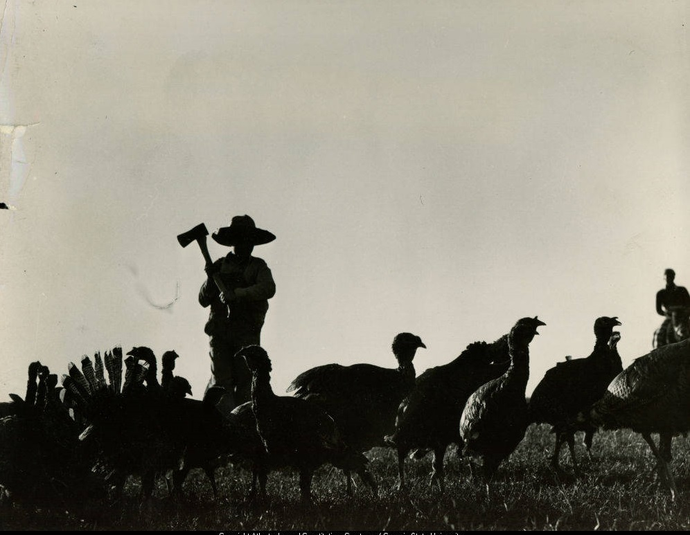 Man holding an axe, looking down at turkeys - November 1940 - Georgia State University Archives